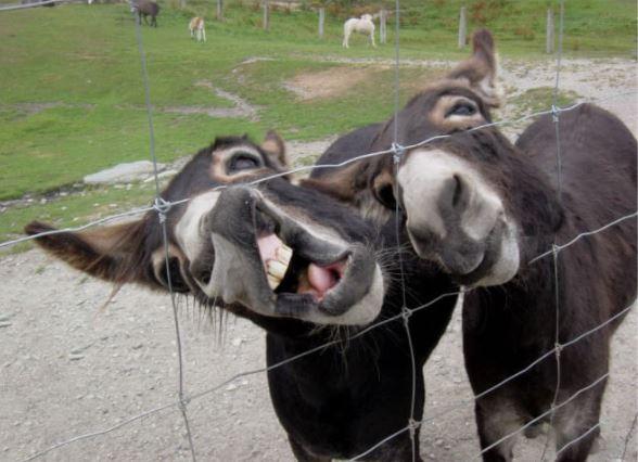donkey making faces