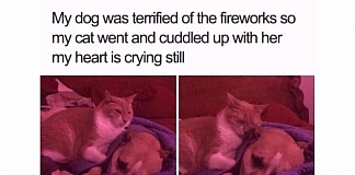 20 Feel Good Memes That Will Tug At Your Heartstrings