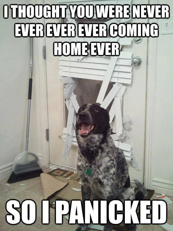 50 Dog Memes To Keep You Laughing This Weekend