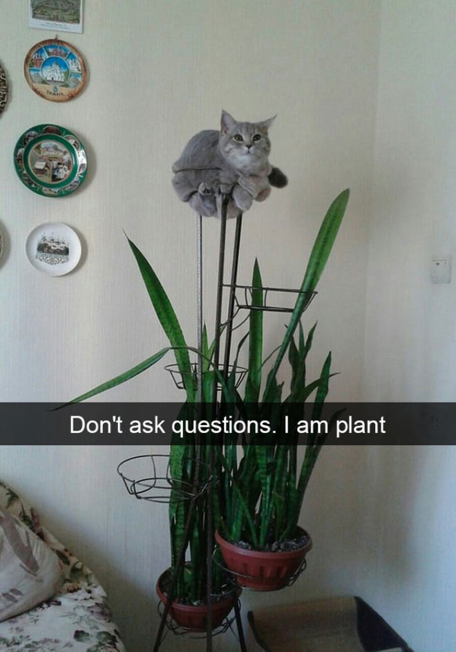 20+ Funny Cat Snapchats That Will Get You Purring For More