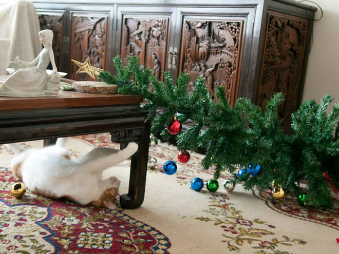 These Pets Ruined Christmas For Everybody
