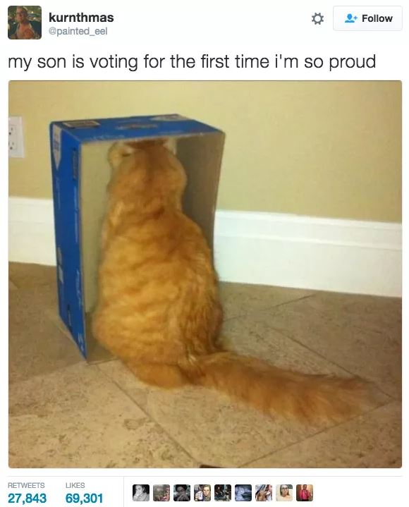 20 Hilarious Cat Tweets That Made Us Laugh In 2017