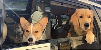 Employee Takes Pictures Of Adorable Dogs That Come To Her Drive-Thru