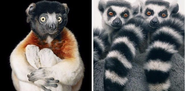 Photographer Captures Amazing Pictures Animals That May Go Extinct