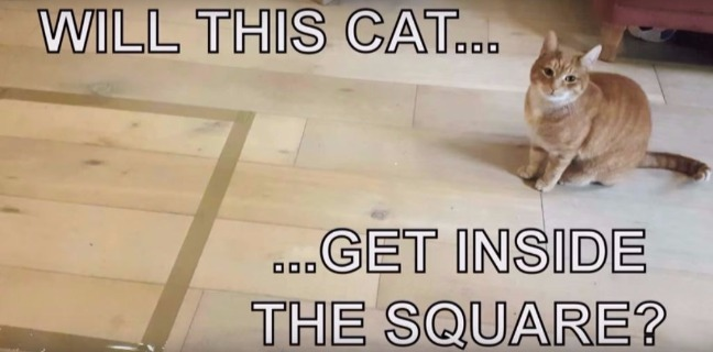 Video Proves Cats Cannot Resist Squares Marked Out On Floor