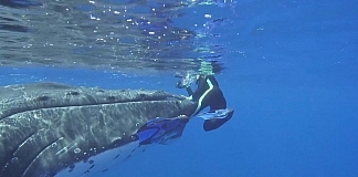 Whale Protecting Diver From Shark Caught On Video