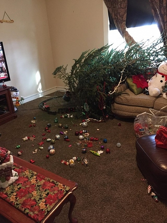 People Shared Their Worst Christmas Day Pictures, Hope You All Had A Good Christmas