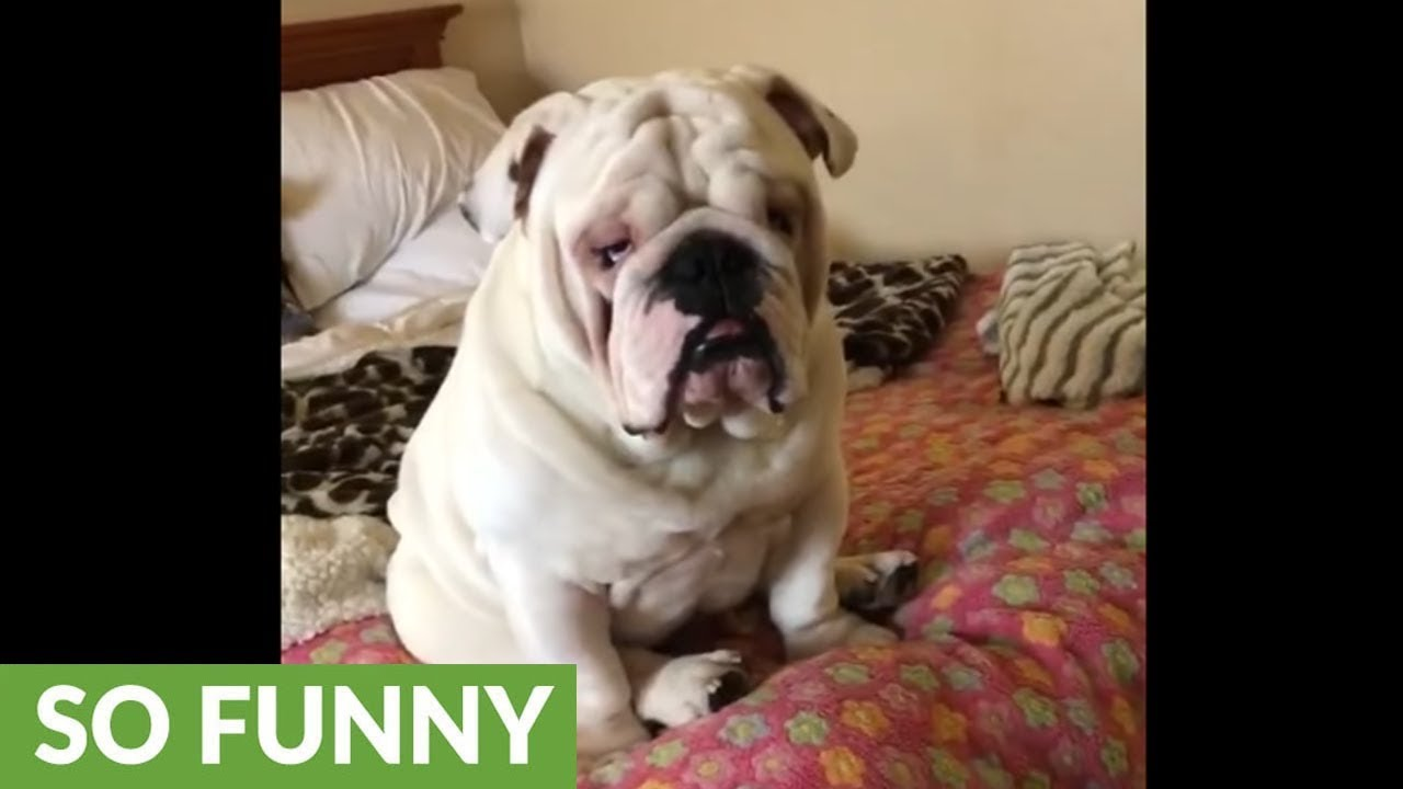 Grumpy Dog Video Might Take Over As The New Viral Video in 2019