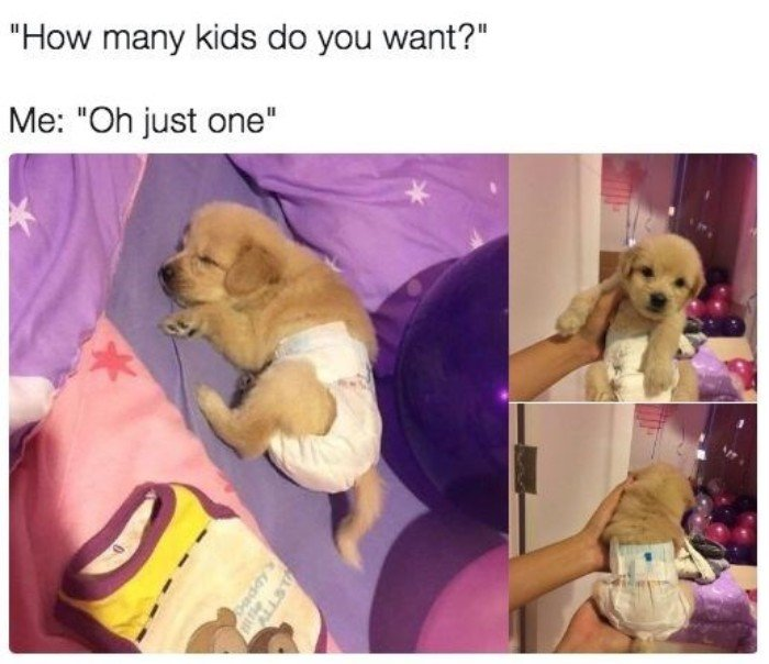 15 Funny And Ridiculous Memes About Why People Prefer Pets Over Kids