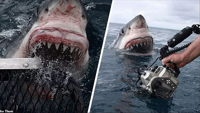 Photographer Captures Moment When Giant Great White Shark Lunges Out Of The Water