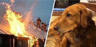 Hank The Dog Barked Up A Storm To Save This Family From A Huge Fire