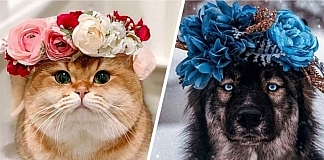 This College Professor Makes Flower Crowns For Animals & They Look Awesome