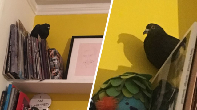 Woman From London Live Tweets Her Pigeon Home Invasion Ordeal