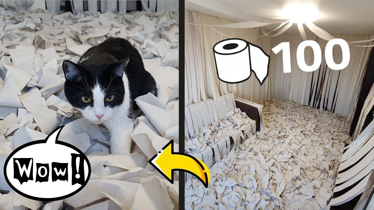 Cat Goes Mad In Room Full Of Toilet Papers In This Viral Video